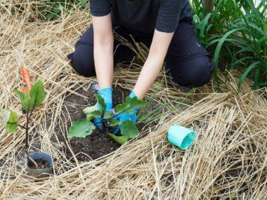 植え付け、種まき開始
