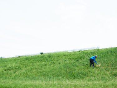 畑に栄養、せっせと緑肥投入~♪